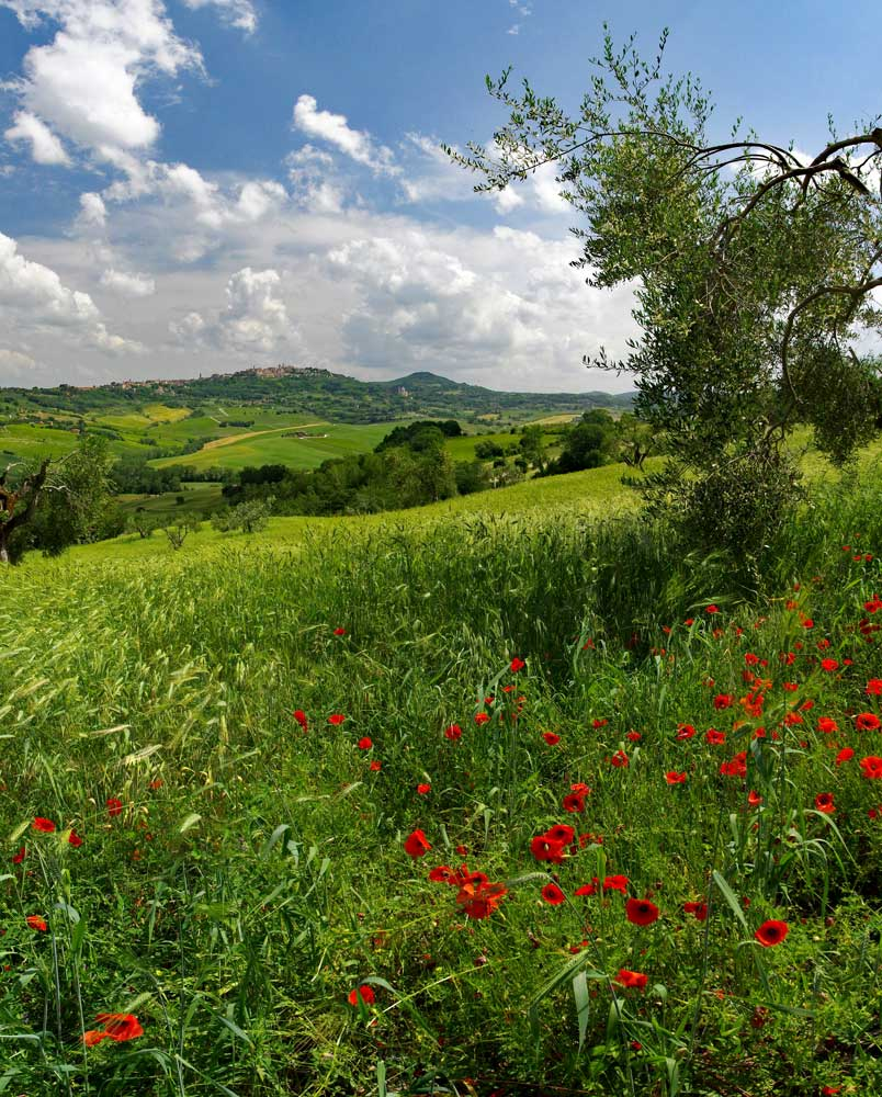 To Montepulciano